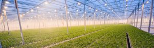 Humidity Solutions assists in hydroponics application